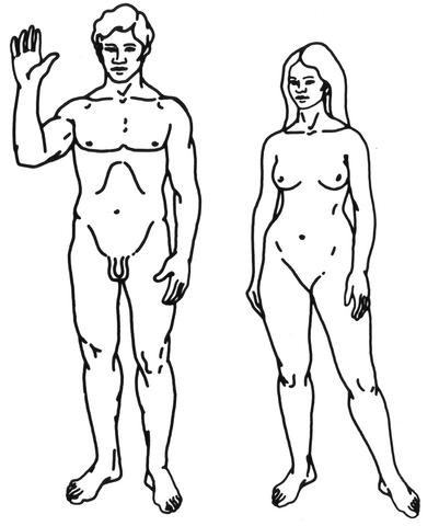 File:HumanDiagram.png
