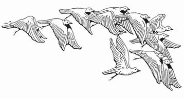 Birds-07
