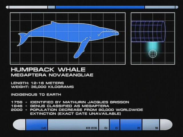 File:Humpback whale data, SciSec 004.jpg
