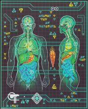 Trill Internal Anatomy