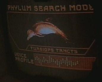 File:Dolphin display, Tursiops truncatus.jpg