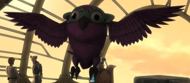 File:Unidentified Kiros bird.jpg
