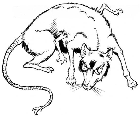 File:Eriaduan rat.png
