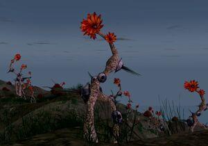 Raventhorn plant