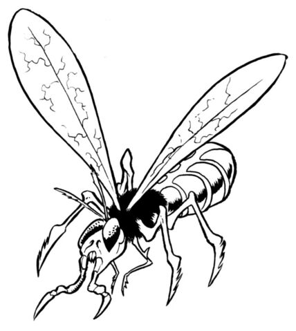 File:Sacorrian grain fly.jpg