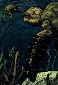 Inv07-Turtles