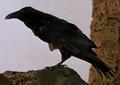 Raven-BFE.png