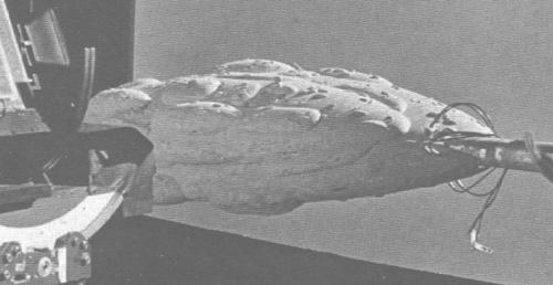File:July 1983 CINEFEX wingless.jpg