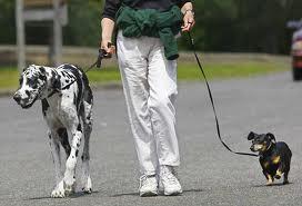 File:People walking their dogs.jpg