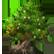 Storm Emoticon tree