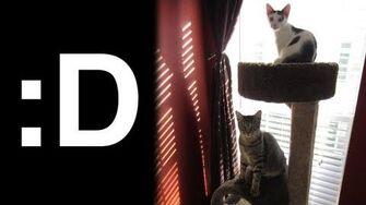 Merry Christmas Kitties! (Day 1123 - 12 21 12)