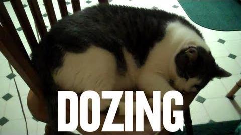Dozing (Day 729 - 11 23 11)