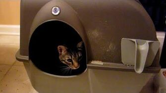 Self-Cleaning Litter Box (Day 1199 - 3 7 13)