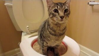My Cats Can Use the Toilet..