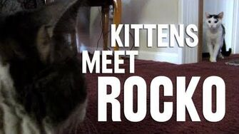 Kittens Meet Rocko! (Day 1126 - 12 24 12)-0