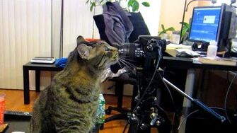 Camera Setup for Q&A's and Mail (Day 2234 - 1 6 16)
