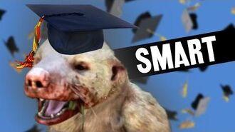 Honey Badger Is Smart