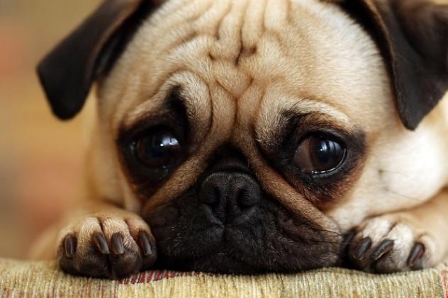 File:Sad-Animal-Faces-02.jpg