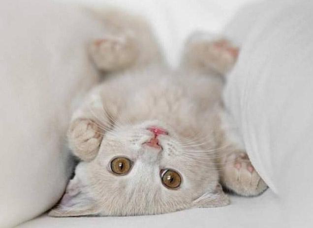 File:Gato.jpg
