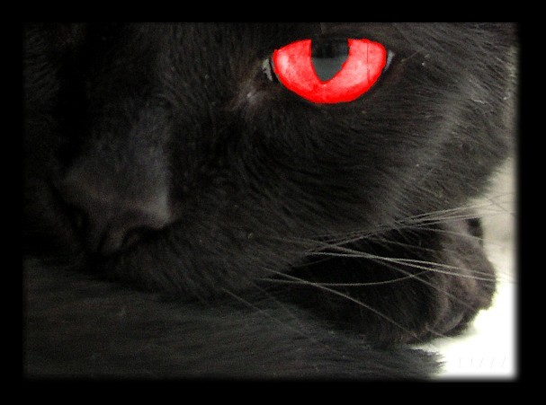 File:The Black Cat red.jpg
