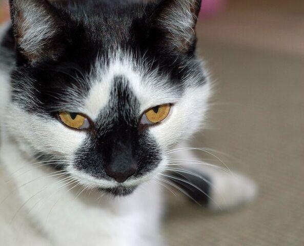 File:Cat-2406 640.jpg