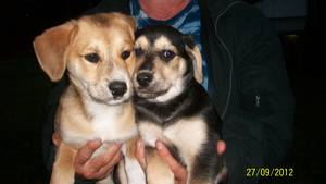 File:Sparky and squidward as puppies.jpg