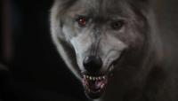Huntsman's Wolf EL 107