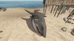 Dead White Shark
