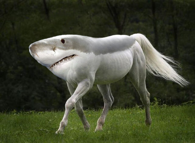 File:Shark-horse.jpg