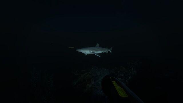 File:Blacktip Reef Shark.jpg