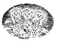African kittens