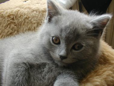 File:Pictures-of-kittens-cats-18.jpg