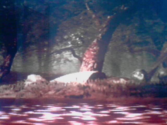 File:Three tree.jpg