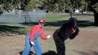 Stupid Mario Brothers Gangnam Style Parody Nintendo Style Donkey Dung