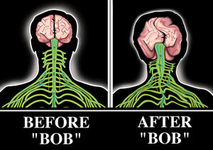 Bobbie brains