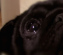 Eric (Dog)