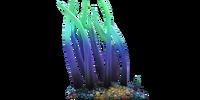 Вьющаяся водоросль