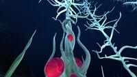 Blood Kelp (4)