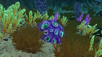 Purple brain coral subnautica wiki fandom powered by wikia for Table coral sample
