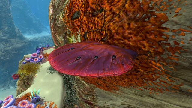 File:Table Coral (1).jpg