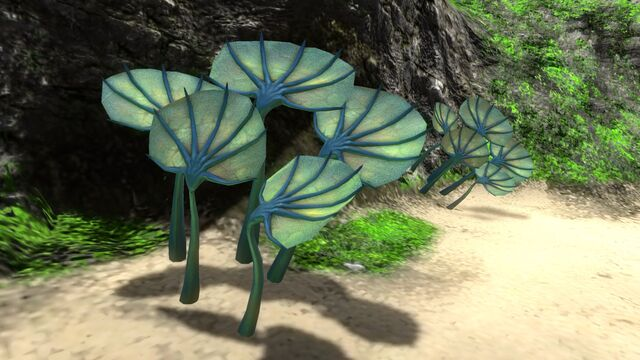 File:Pygmy Fan (3).jpg