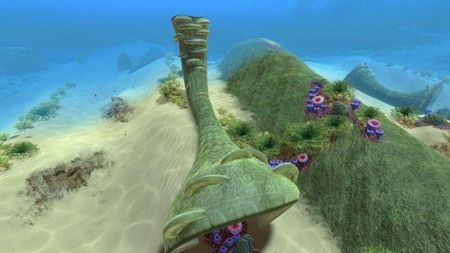 File:Coral Tube (01).jpg