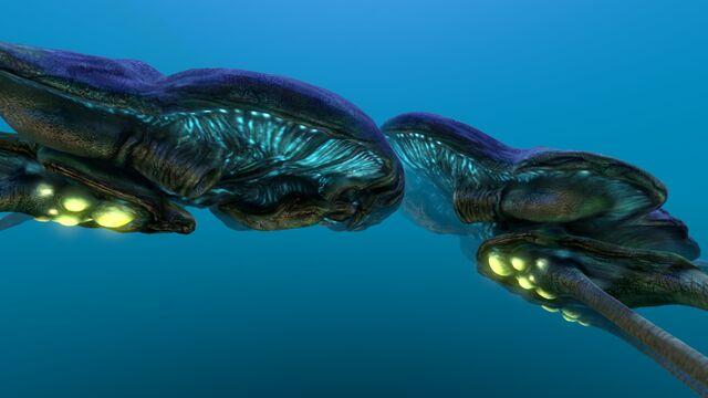 File:Reefback (7).jpg