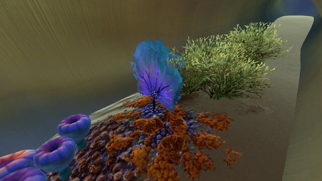 File:PurpleFan01.jpg
