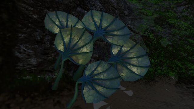File:Pygmy Fan (5).jpg