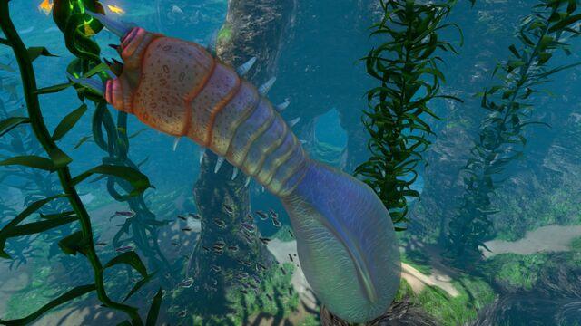 File:Kelp Forest (13).jpg
