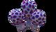 Speckled Rattler Flora