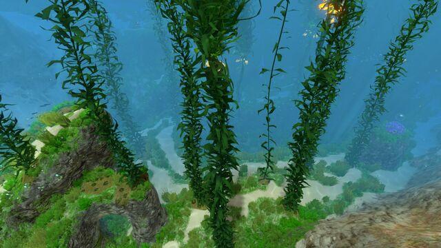 File:Kelp Forest (7).jpg