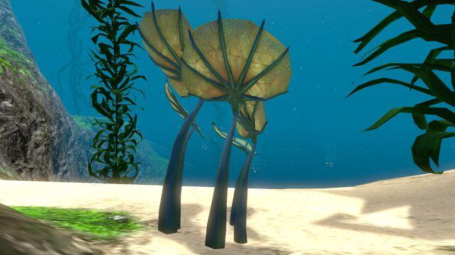 File:Pygmy Fan (4).jpg
