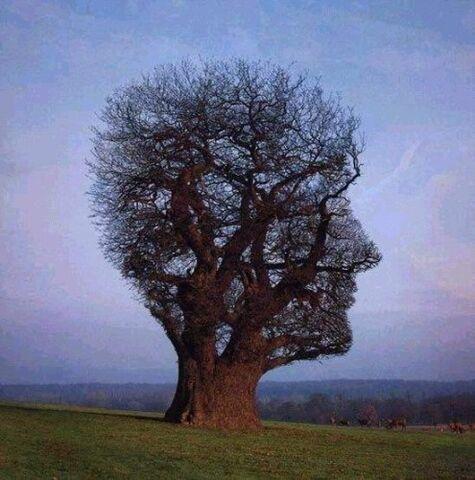 File:Interesting-Trees-Photos-2231-2.jpg